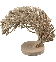 Picture for category Dimond Home 2181-046 Decor Coral Wood Wistmans Wood