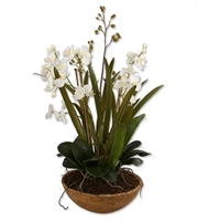 Picture for category World of Decor RL-37824 Decor n/a Moth Orchid Planter